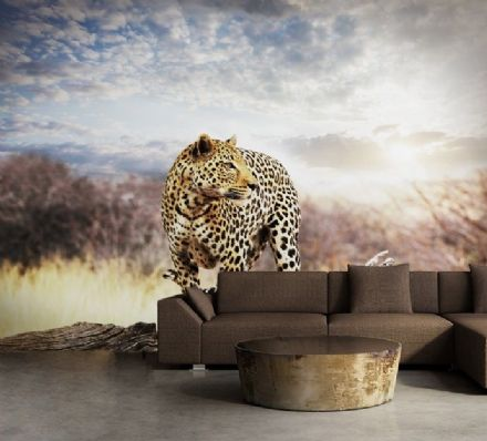 Murals of Leopard - home wallpaper